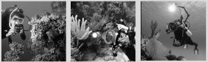 Zemūdens fotogrāfs