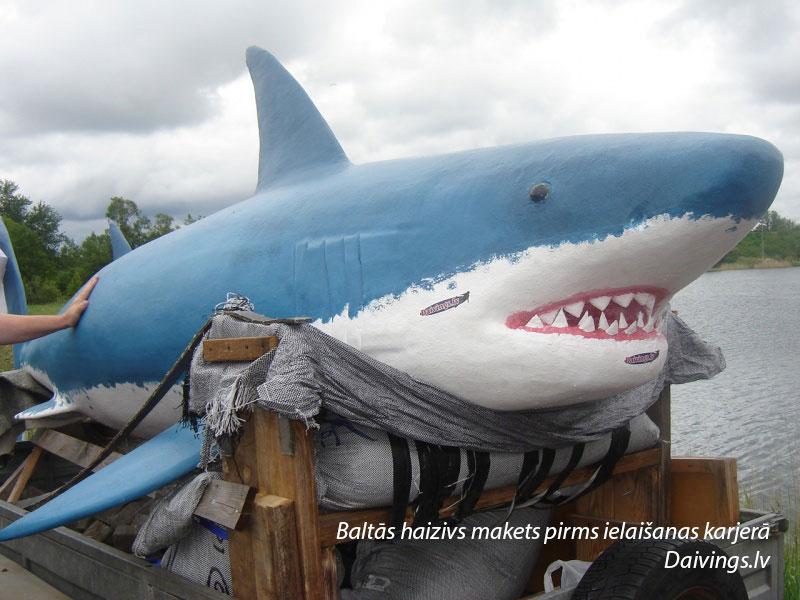 Baltās haizivs makets pirms ielaišanas karjerā