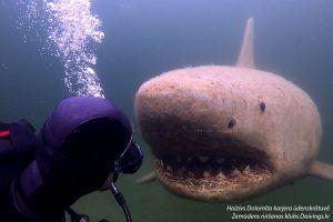 Dolomite quarry reservoir 3.5 meters long White shark