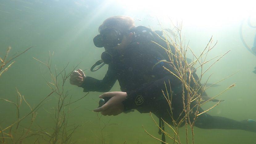 Open Water Diver PADI Open Water Diver Diver training.jpg